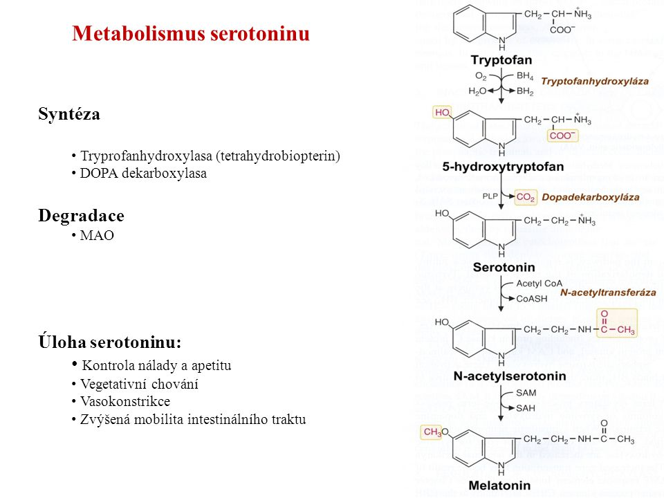Metabolismus serotoninu