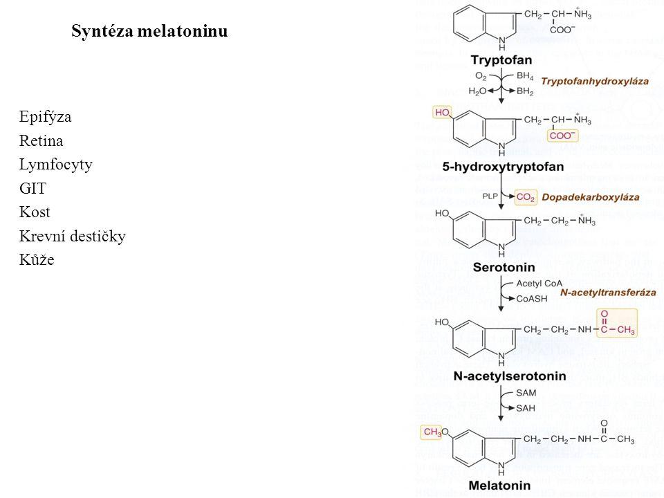 Syntéza melatoninu Epifýza Retina Lymfocyty GIT Kost Krevní destičky