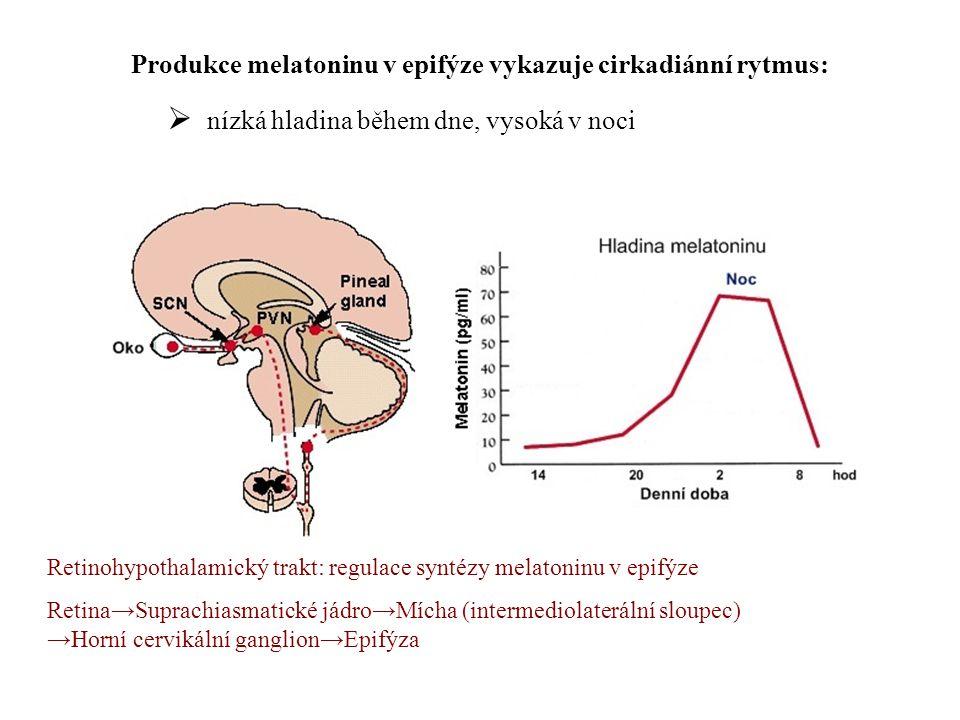 Produkce melatoninu v epifýze vykazuje cirkadiánní rytmus: