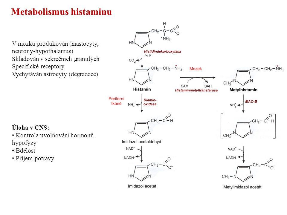 Metabolismus histaminu