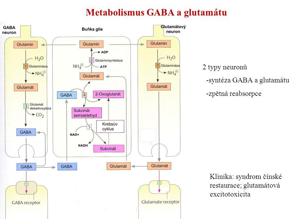 Metabolismus GABA a glutamátu