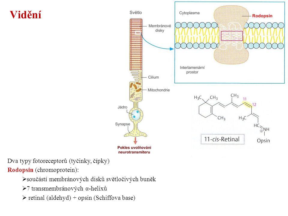 Vidění Dva typy fotoreceptorů (tyčinky, čípky)