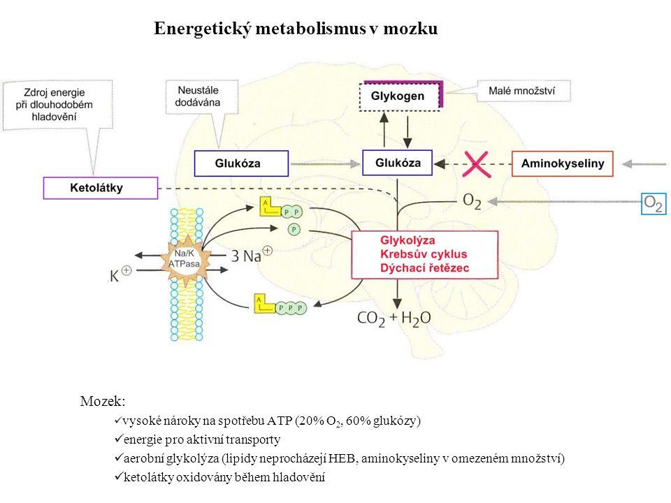 Energetický metabolismus v mozku