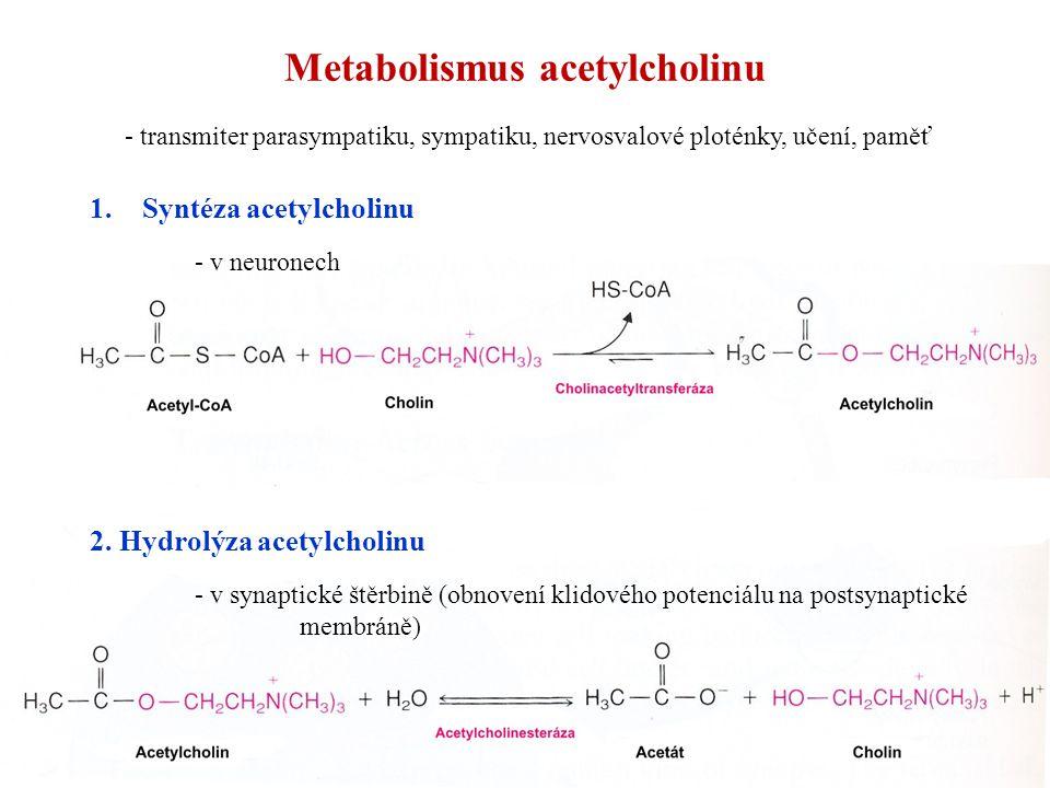 Metabolismus acetylcholinu