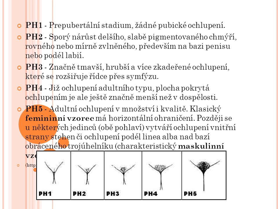 PH1 - Prepubertální stadium, žádné pubické ochlupení.
