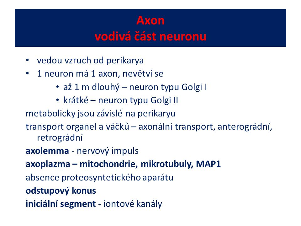 Axon vodivá část neuronu