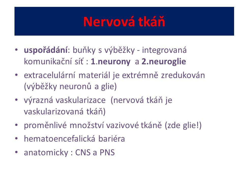 Nervová tkáň uspořádání: buňky s výběžky - integrovaná komunikační síť : 1.neurony a 2.neuroglie.