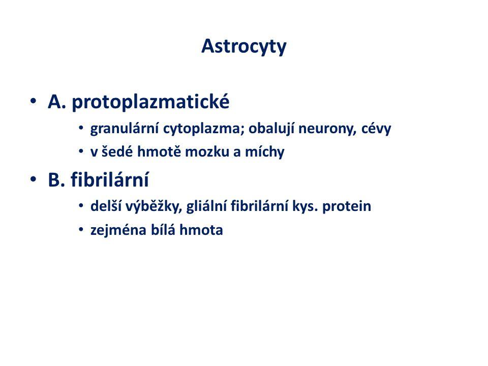 Astrocyty A. protoplazmatické B. fibrilární