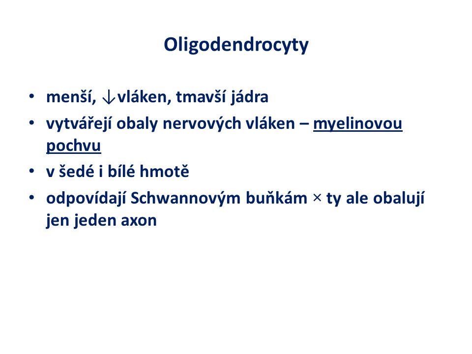 Oligodendrocyty menší, ↓vláken, tmavší jádra
