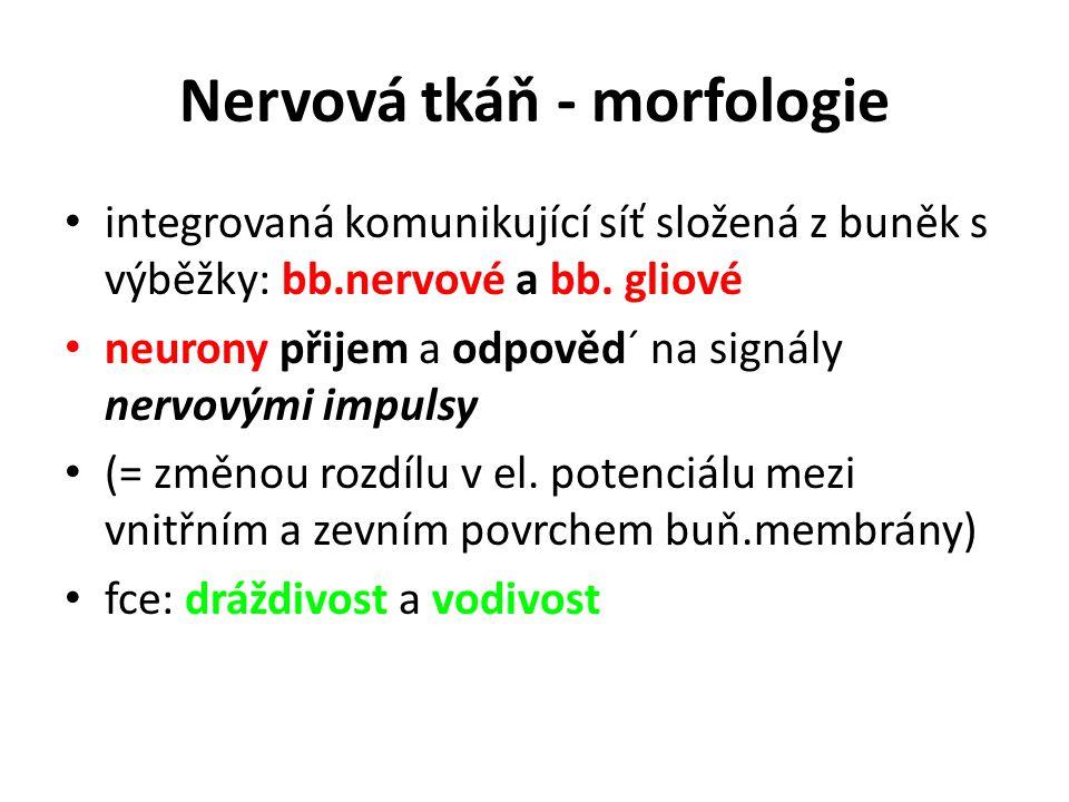Nervová tkáň - morfologie