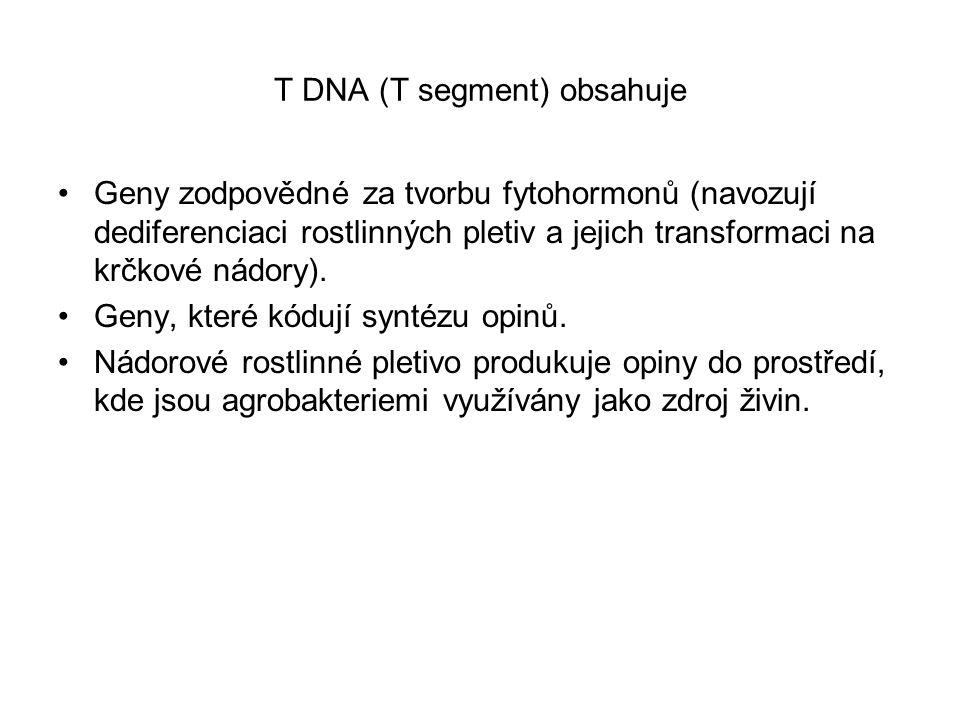 T DNA (T segment) obsahuje