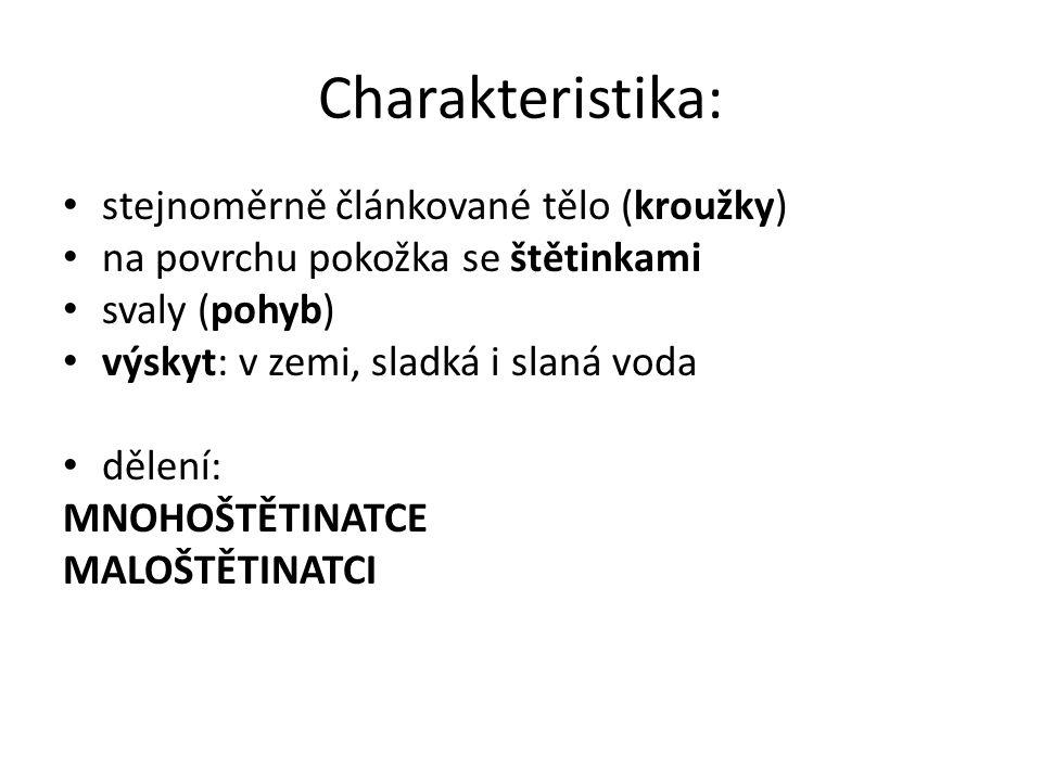 Charakteristika: stejnoměrně článkované tělo (kroužky)
