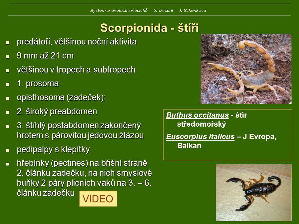 Systém a evoluce živočichů 5. cvičení J. Schenková
