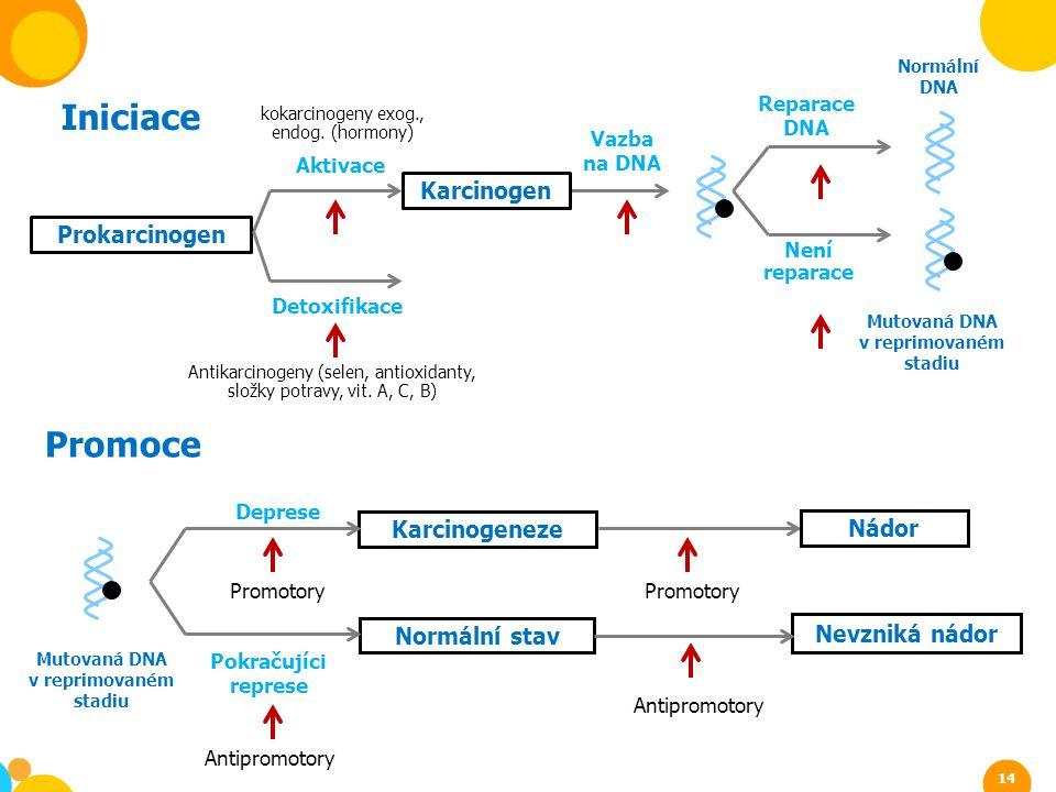 Iniciace Promoce Karcinogen Prokarcinogen Karcinogeneze Nádor