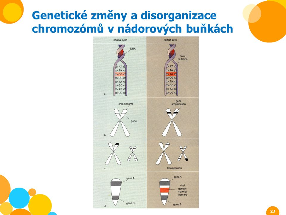Genetické změny a disorganizace chromozómů v nádorových buňkách