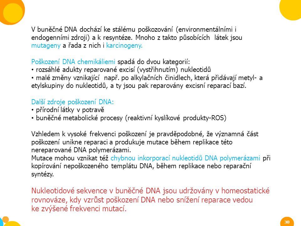 ke zvýšené frekvenci mutací.