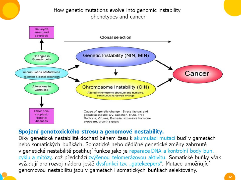 How genetic mutations evolve into genomic instability