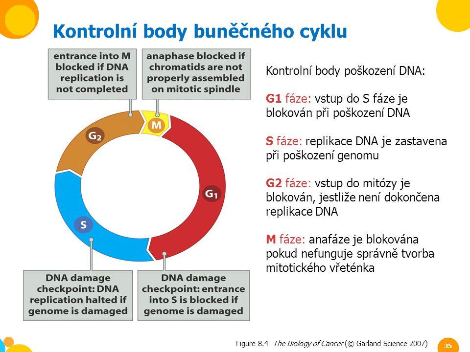 Kontrolní body buněčného cyklu