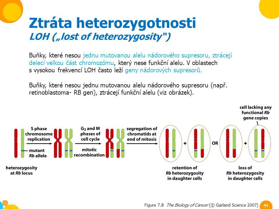 Ztráta heterozygotnosti
