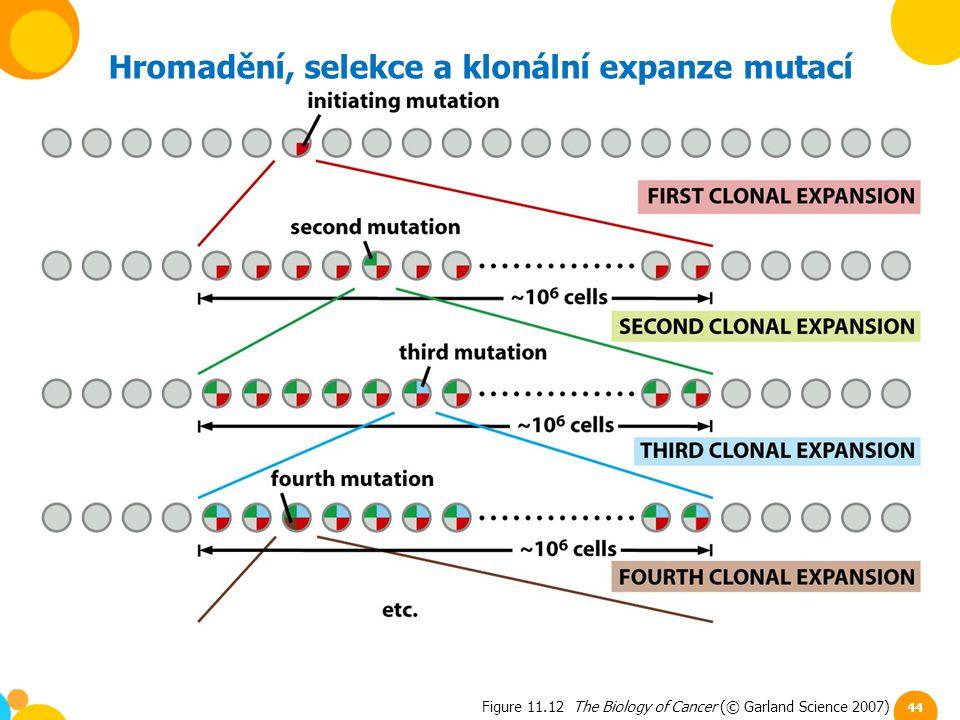 Hromadění, selekce a klonální expanze mutací