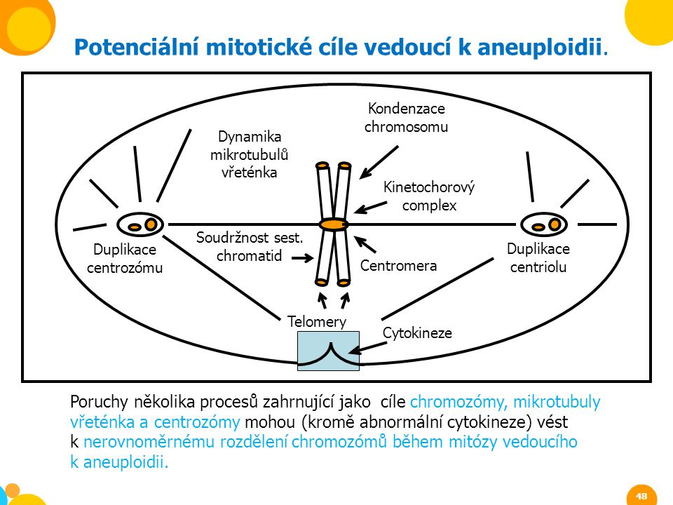 Potenciální mitotické cíle vedoucí k aneuploidii.