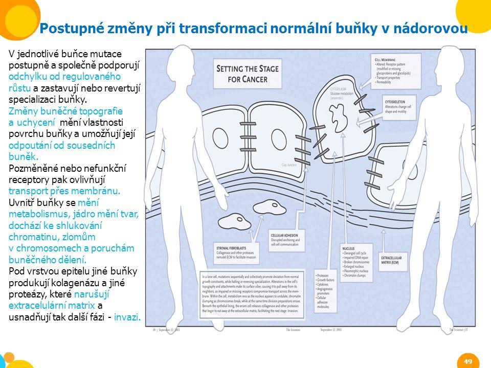 Postupné změny při transformaci normální buňky v nádorovou