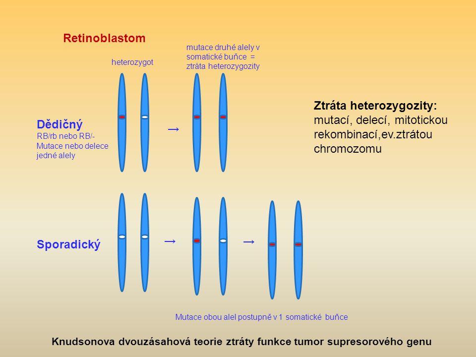 Retinoblastom mutace druhé alely v somatické buňce = ztráta heterozygozity. heterozygot.