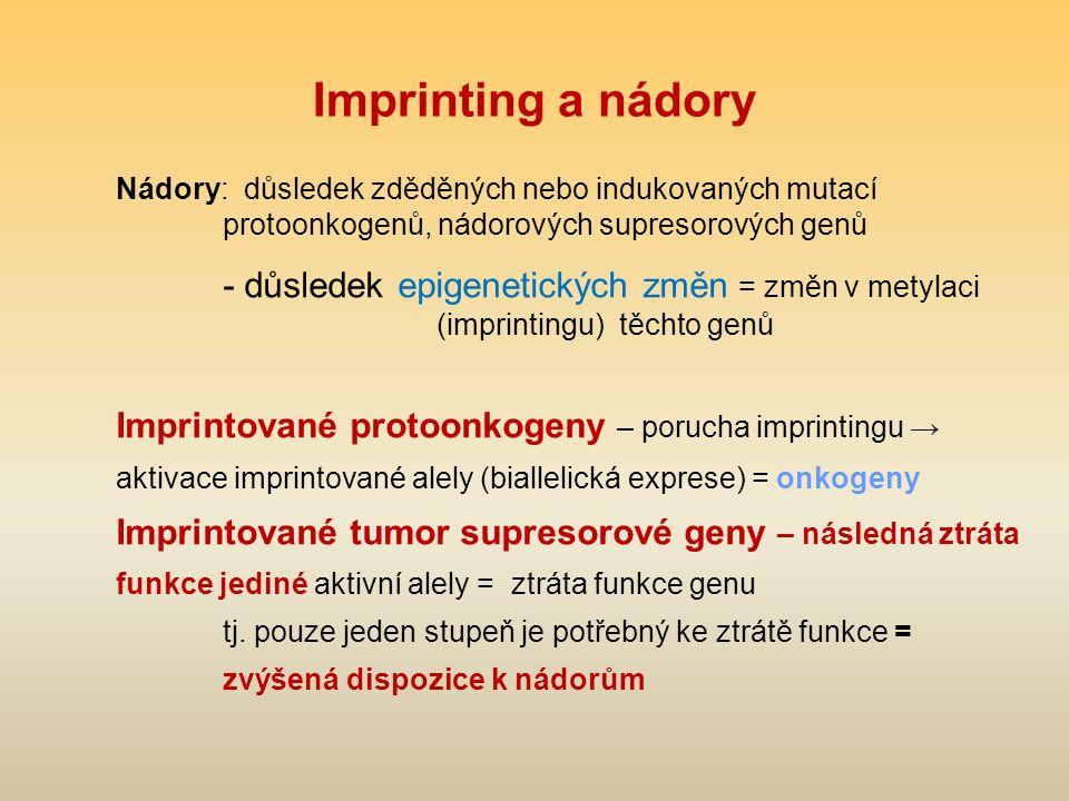 Imprinting a nádory Nádory: důsledek zděděných nebo indukovaných mutací protoonkogenů, nádorových supresorových genů.