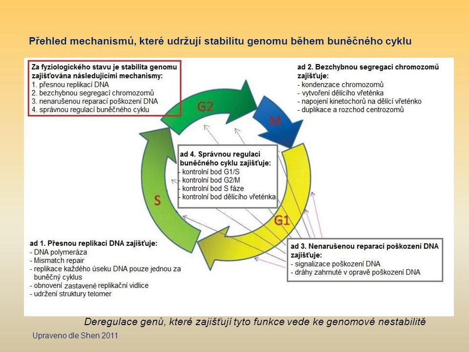 Přehled mechanismů, které udržují stabilitu genomu během buněčného cyklu