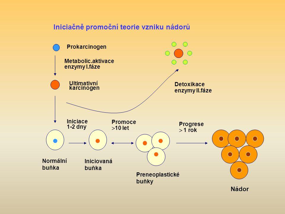 v Iniciačně promoční teorie vzniku nádorů Nádor Prokarcinogen