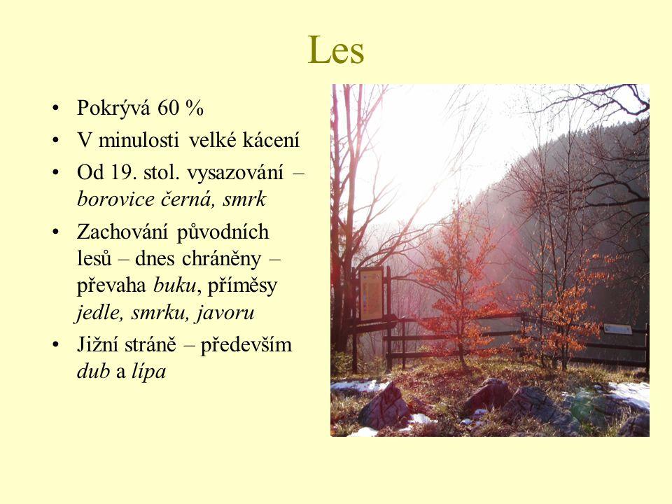 Les Pokrývá 60 % V minulosti velké kácení