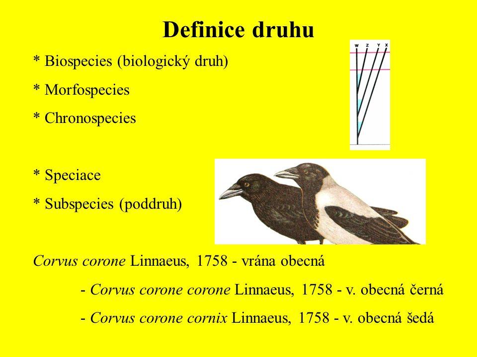 Definice druhu Biospecies (biologický druh) Morfospecies Chronospecies