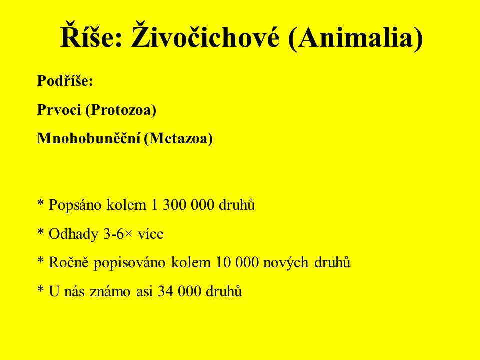 Říše: Živočichové (Animalia)