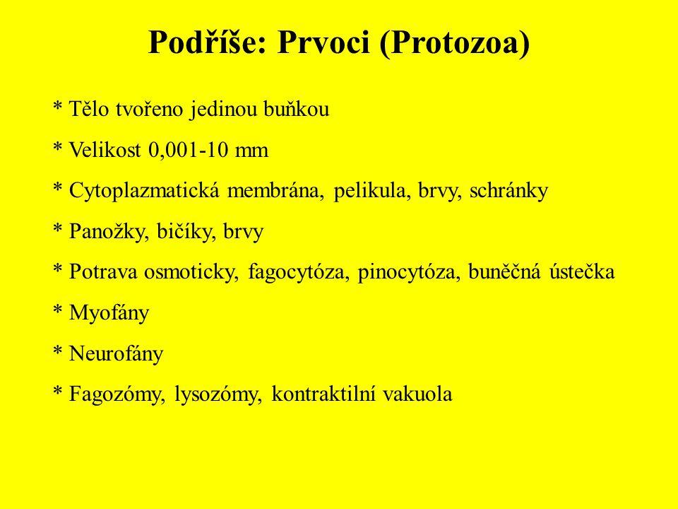 Podříše: Prvoci (Protozoa)