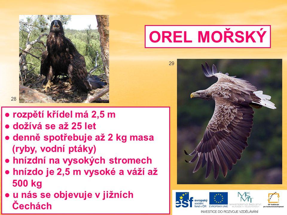 OREL MOŘSKÝ ● rozpětí křídel má 2,5 m ● dožívá se až 25 let