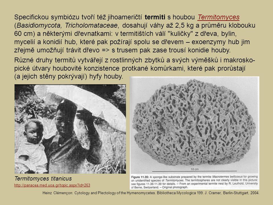 Specifickou symbiózu tvoří též jihoameričtí termiti s houbou Termitomyces (Basidiomycota, Tricholomataceae, dosahují váhy až 2,5 kg a průměru klobouku 60 cm) a některými dřevnatkami: v termitištích válí kuličky z dřeva, bylin, mycelií a konidií hub, které pak požírají spolu se dřevem – exoenzymy hub jim zřejmě umožňují trávit dřevo => s trusem pak zase trousí konidie houby.