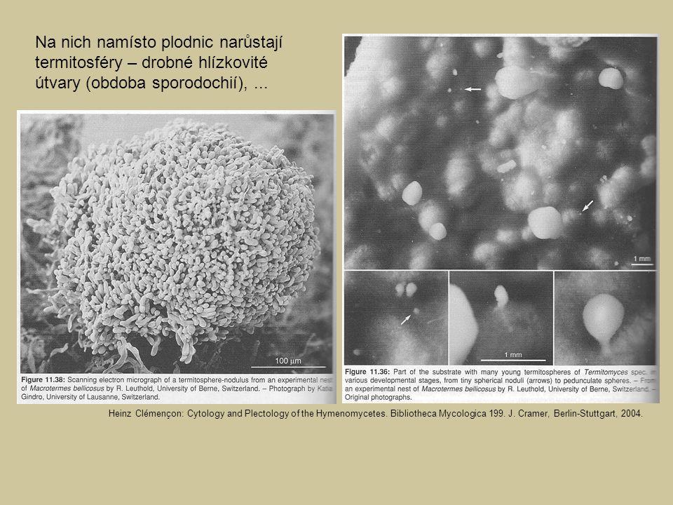 Na nich namísto plodnic narůstají termitosféry – drobné hlízkovité