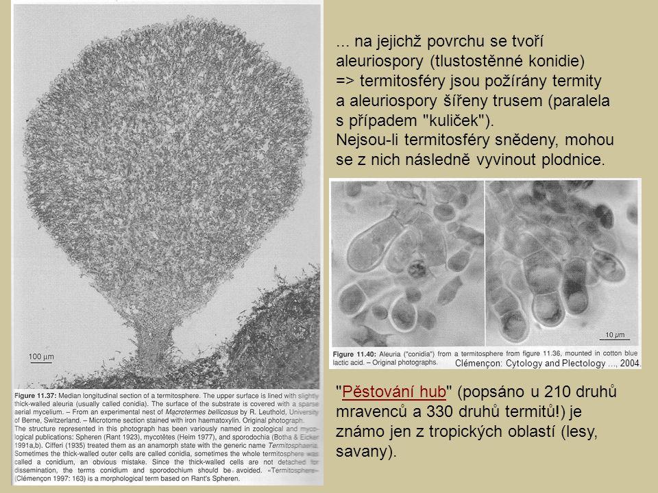... na jejichž povrchu se tvoří aleuriospory (tlustostěnné konidie)