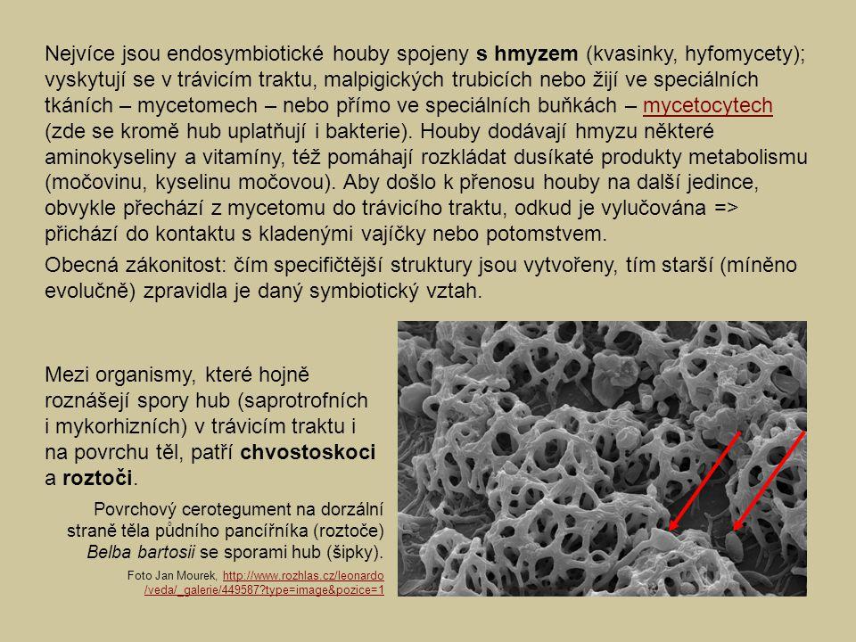 Nejvíce jsou endosymbiotické houby spojeny s hmyzem (kvasinky, hyfomycety); vyskytují se v trávicím traktu, malpigických trubicích nebo žijí ve speciálních tkáních – mycetomech – nebo přímo ve speciálních buňkách – mycetocytech (zde se kromě hub uplatňují i bakterie). Houby dodávají hmyzu některé aminokyseliny a vitamíny, též pomáhají rozkládat dusíkaté produkty metabolismu (močovinu, kyselinu močovou). Aby došlo k přenosu houby na další jedince, obvykle přechází z mycetomu do trávicího traktu, odkud je vylučována => přichází do kontaktu s kladenými vajíčky nebo potomstvem.