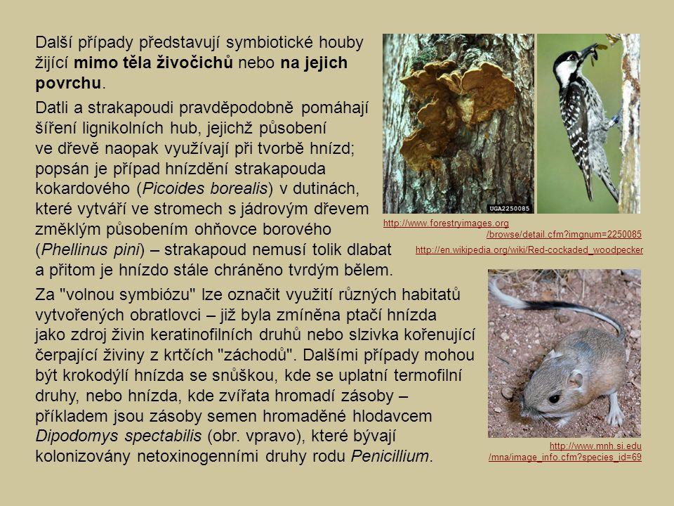 Další případy představují symbiotické houby