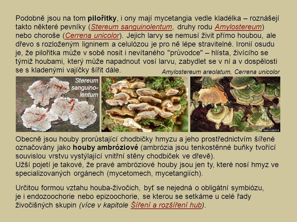 Podobně jsou na tom pilořitky, i ony mají mycetangia vedle kladélka – roznášejí takto některé pevníky (Stereum sanguinolentum, druhy rodu Amylostereum) nebo choroše (Cerrena unicolor). Jejich larvy se nemusí živit přímo houbou, ale dřevo s rozloženým ligninem a celulózou je pro ně lépe stravitelné. Ironií osudu je, že pilořitka může v sobě nosit i nevítaného průvodce – hlísta, živícího se týmiž houbami, který může napadnout vosí larvu, zabydlet se v ní a v dospělosti se s kladenými vajíčky šířit dále.
