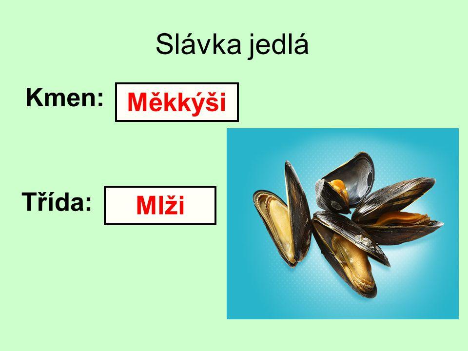 Slávka jedlá Kmen: Měkkýši Třída: Mlži
