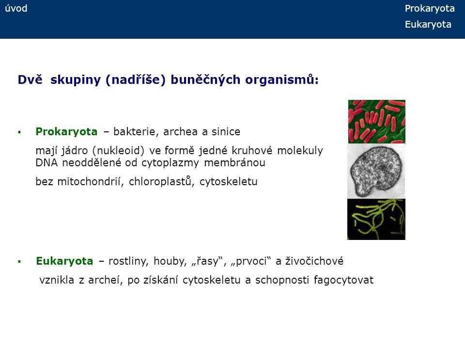 Dvě skupiny (nadříše) buněčných organismů: