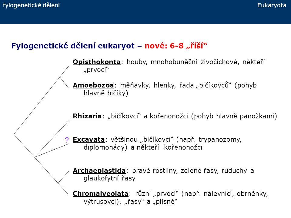 """Fylogenetické dělení eukaryot – nové: 6-8 """"říší"""