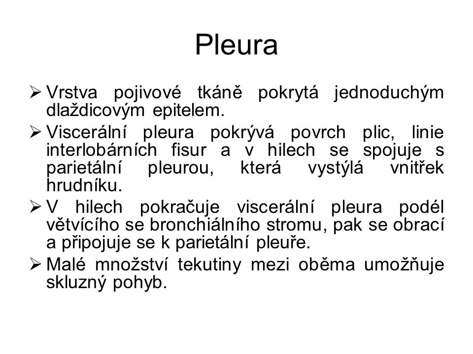 Pleura Vrstva pojivové tkáně pokrytá jednoduchým dlaždicovým epitelem.
