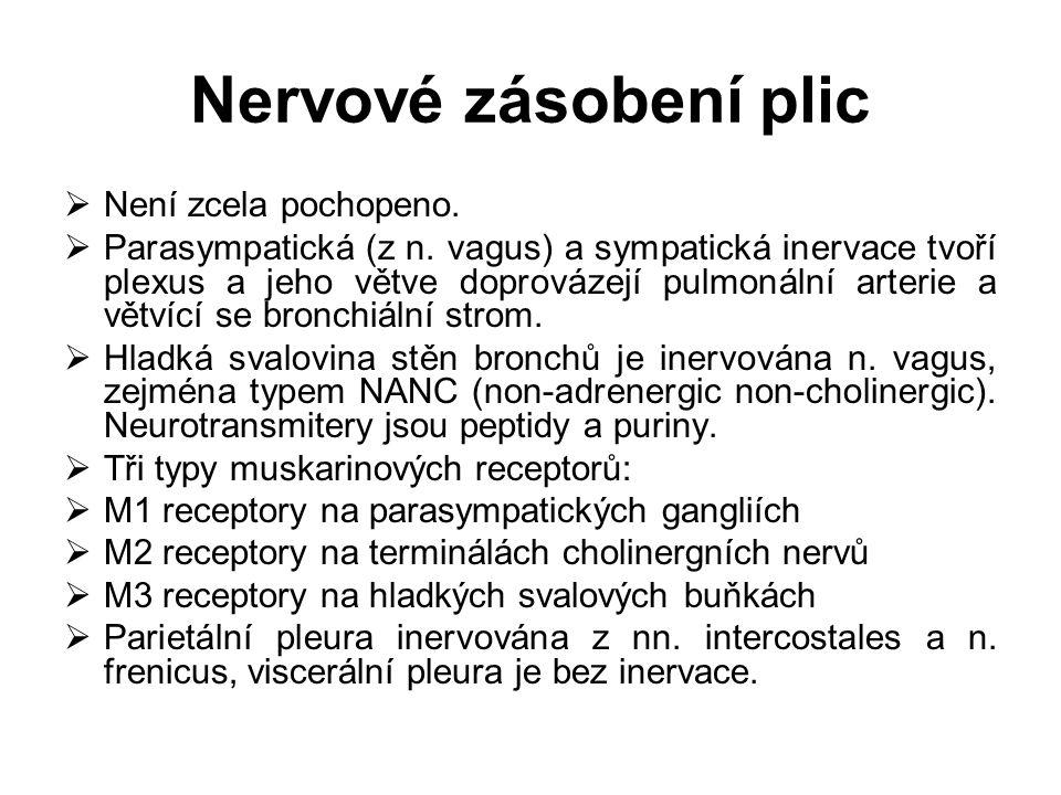 Nervové zásobení plic Není zcela pochopeno.