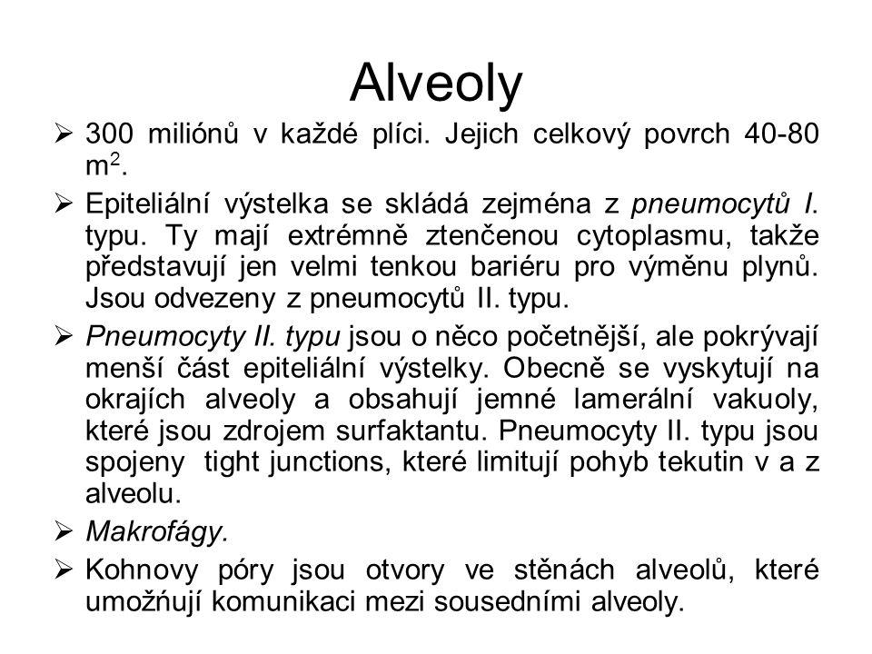 Alveoly 300 miliónů v každé plíci. Jejich celkový povrch 40-80 m2.