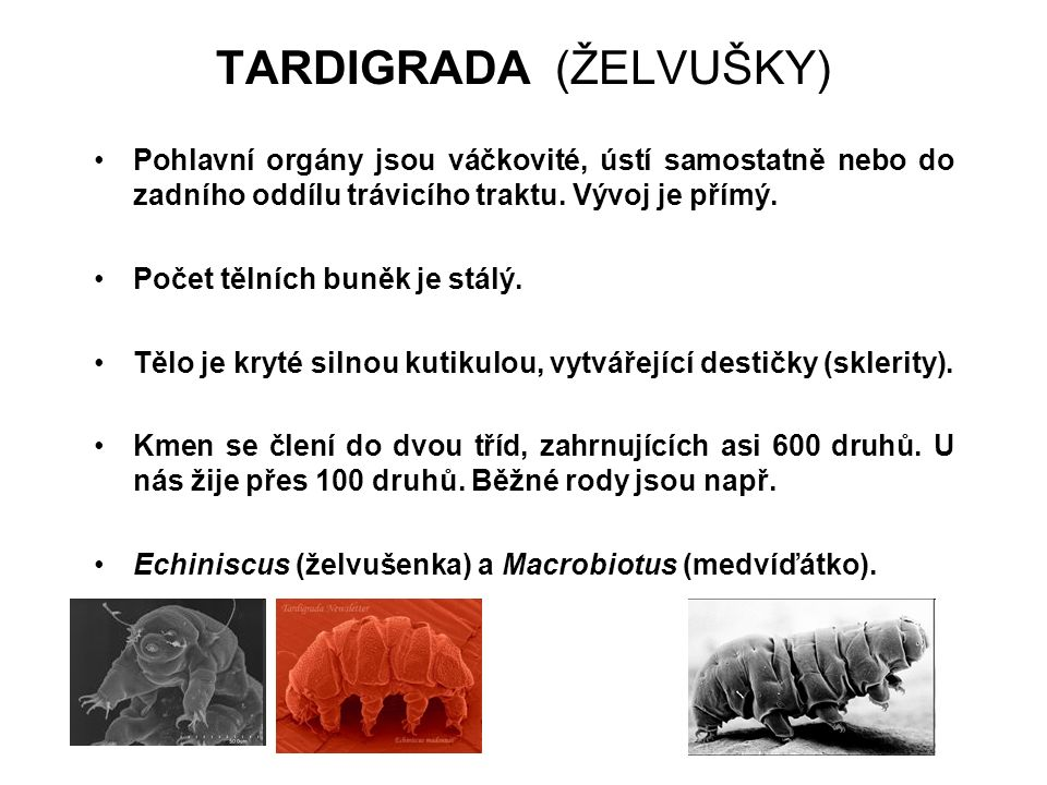 TARDIGRADA (ŽELVUŠKY)