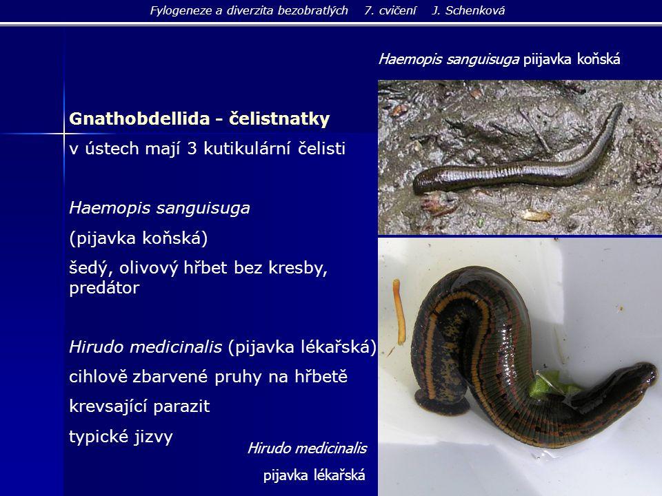 Fylogeneze a diverzita bezobratlých 7. cvičení J. Schenková