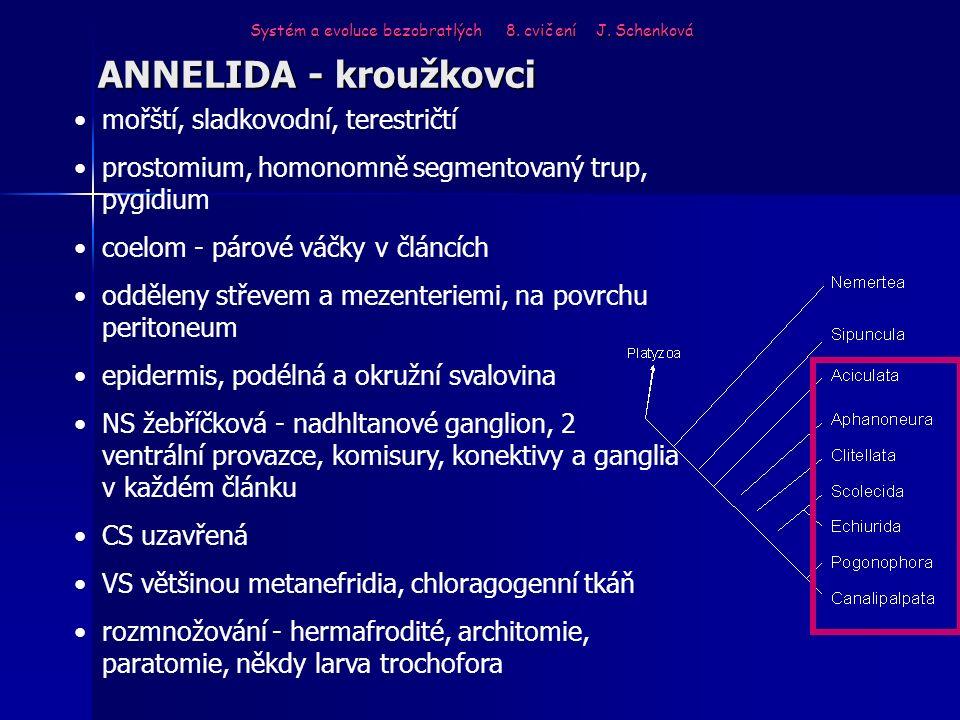 ANNELIDA - kroužkovci mořští, sladkovodní, terestričtí